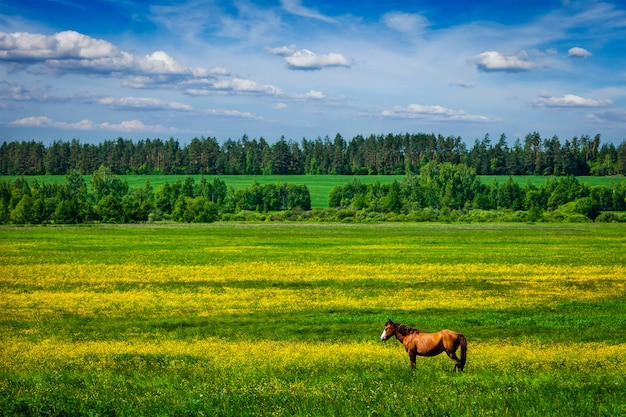 Zielony scenerii lanscape z koniem