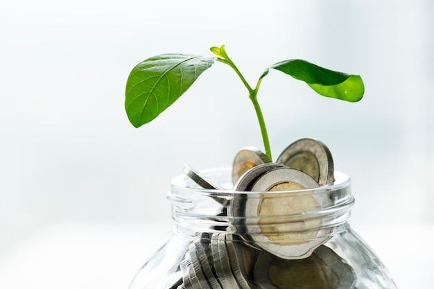 Zielony słoik gospodarki z pieniędzmi i rosnącą rośliną