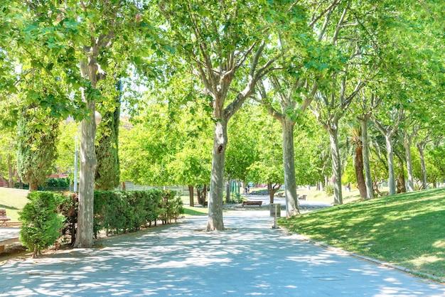 Zielony słoneczny park z zielonymi drzewami w barcelonie