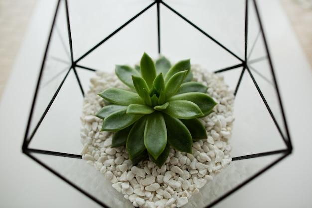 Zielony soczysty w szklanej donicy w białym loftowym wnętrzu w stylu skandynawskim.