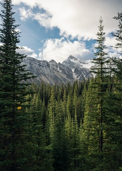Zielony sosnowy las z skalistymi górami i niebieskim niebem