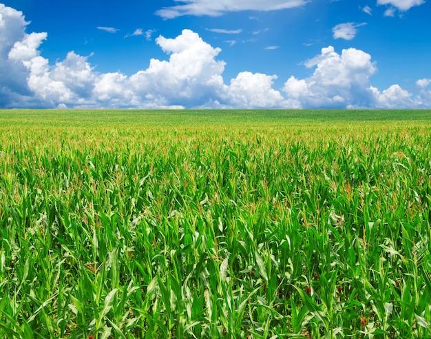 Zielony śródpolny horyzont z niebem