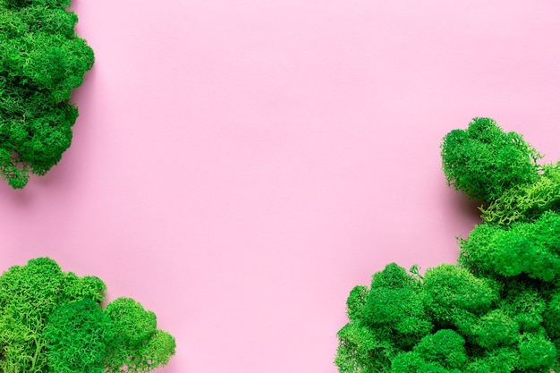 Zielony stabilizowany mech na różowej powierzchni papieru