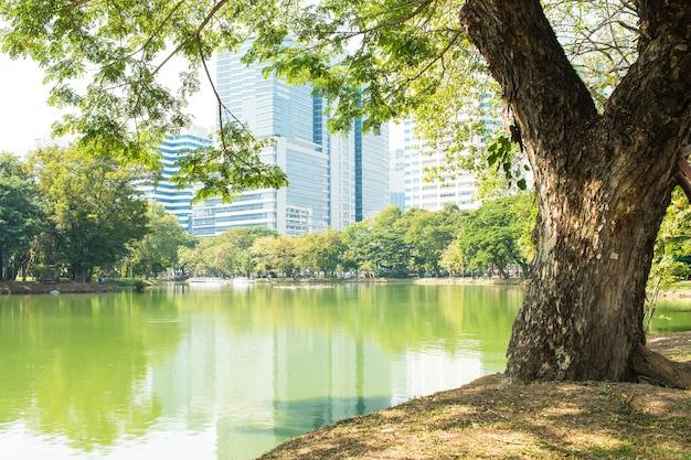 Zielony sward park przy ranku światłem słonecznym z dużymi drzewami plenerowymi, zamazuje nowożytnego budynek przy lumphini parkiem, bangkok