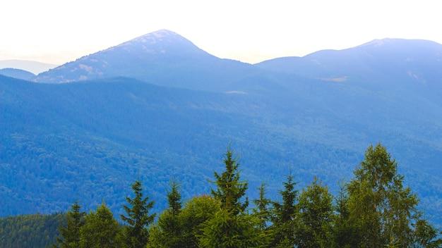 Zielony świerk na błękitnych górach