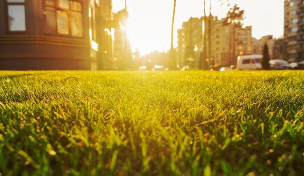 Zielony trawnik na podwórku kompleksu mieszkalnego przed pięknym zachodem słońca.