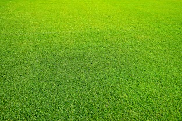 Zielony trawnik na tle tekstura tła zielonej trawy