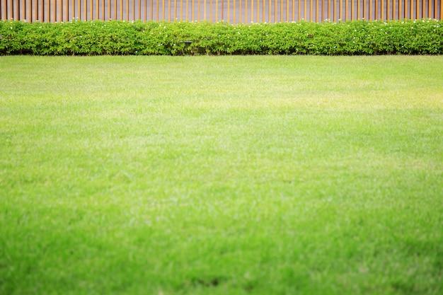 Zielony trawnik w ogrodzie.