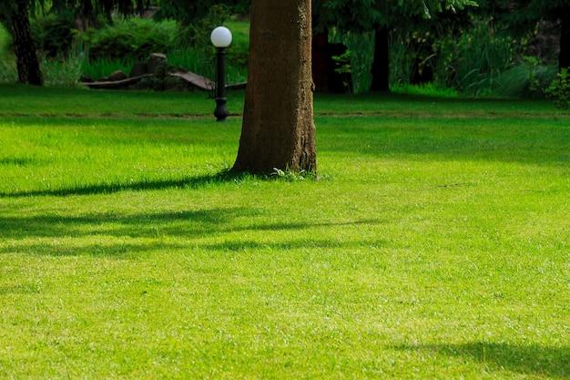 Zielony trawnik w parku miejskim, piękny park z drzewem pośrodku