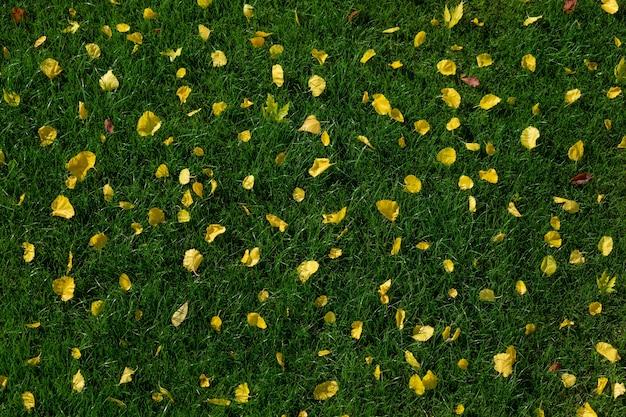 Zielony trawnik z żółtymi jesiennymi liśćmi. widok z góry