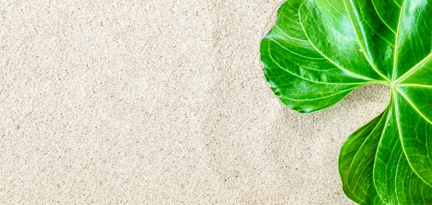 Zielony tropikalny liść na tle białego piasku plaży, widok z góry, miejsce na kopię, baner, koncepcja ninimalistyczna