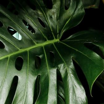 Zielony tropikalny liść zbliżenie