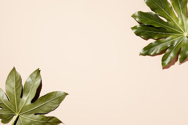Zielony tropikalny liście tło słońca. uroda, koncepcja mody. minimalne, sztuka, tropikalny tło, koncepcja lato. widok z góry, leżał płasko, kopia przestrzeń.