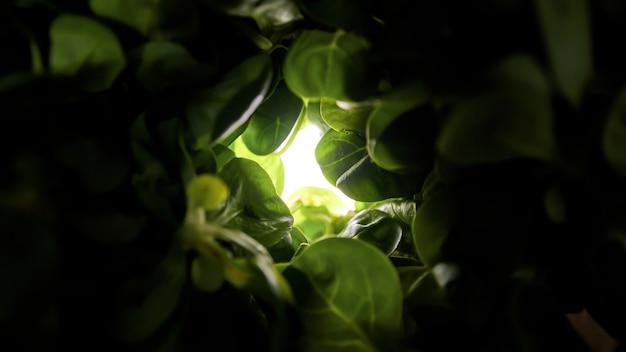 Zielony tunel ze szpinakiem