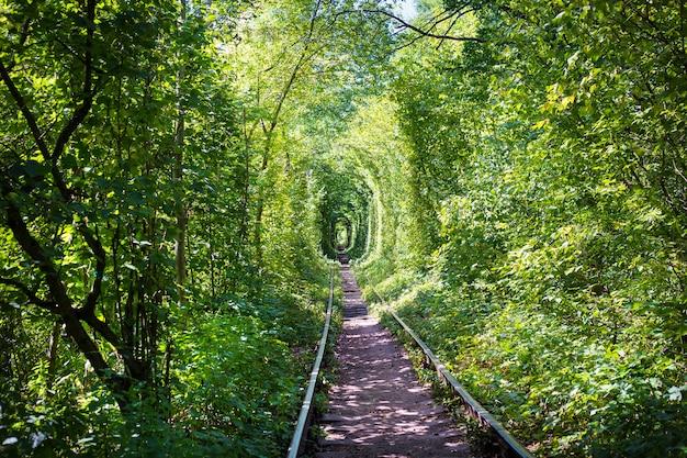 Zielony tuner w lesie. miejsce miłości.
