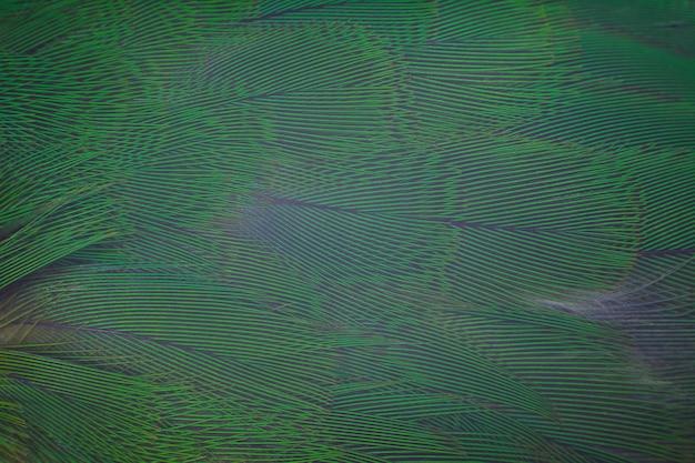 Zielony turkus piórkowy tekstury tło