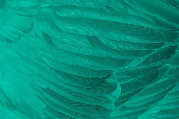 Zielony turkus pióro tekstura tło