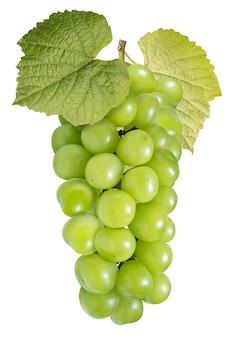Zielony winogron z liśćmi na białym, shine muscat grape na białym tle ze ścieżką przycinającą.