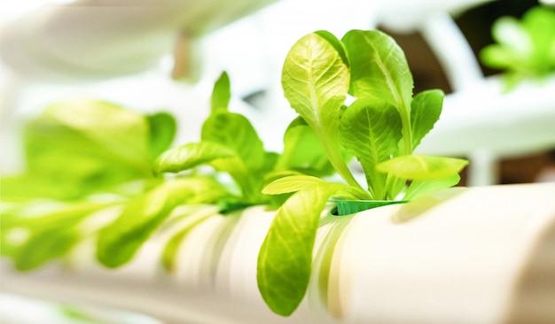 Zielony wzór liści warzywnych