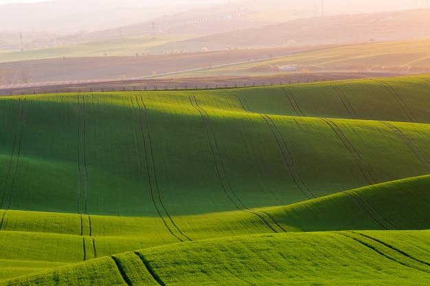 Zielonych fala wzgórza w południowych moravia, republika czech podczas zmierzchu