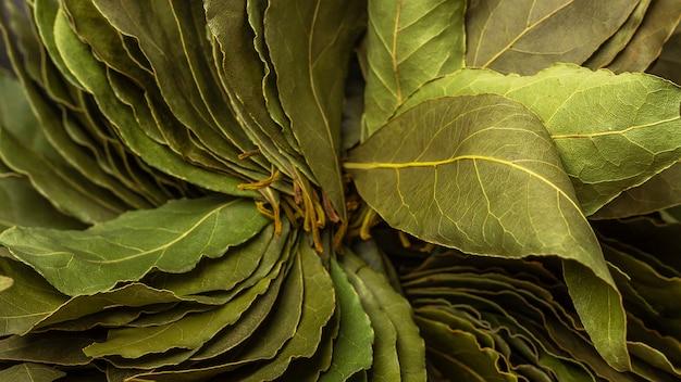 Zielonych liści laurowych z bliska