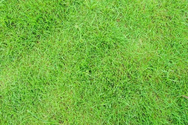 Ziemia dni widok z teksturą trawy