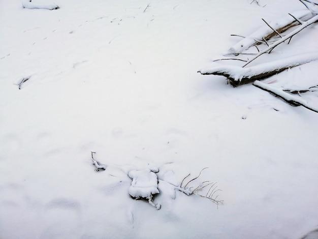 Ziemia pokryta gałęziami i śniegiem w słońcu w larvik w norwegii