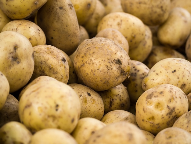 Ziemniaki do sprzedaży na targu warzywnym. wśród wielu dostępnych na rynku dużych ziemniaków w tle wyróżnia się świeży ekologiczny ziemniak. kupa korzenia ziemniaków. nieostrość