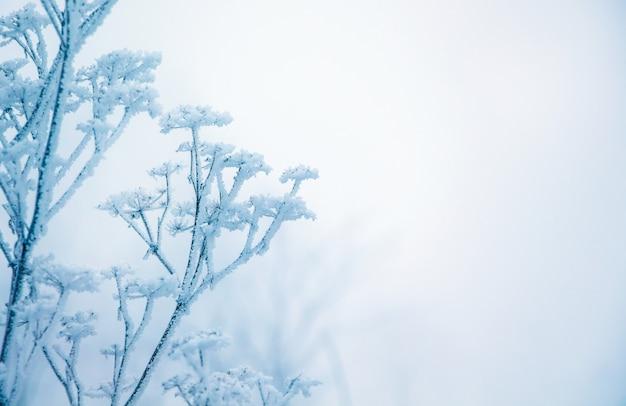 Zima, gałąź suchej rośliny pokrytej szronem, we właściwe wolne miejsce, symbol wytrwałości i wytrwałości