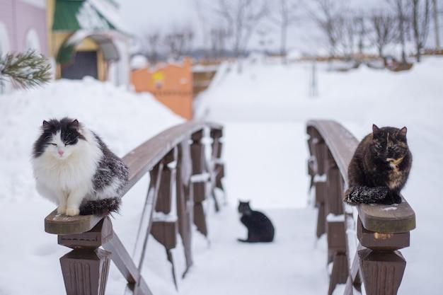 Zimą koty siedzą na drewnianej poręczy w pobliżu wiejskiego domu