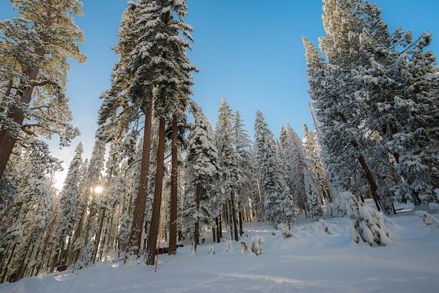 Zima krajobraz na górze w ranku
