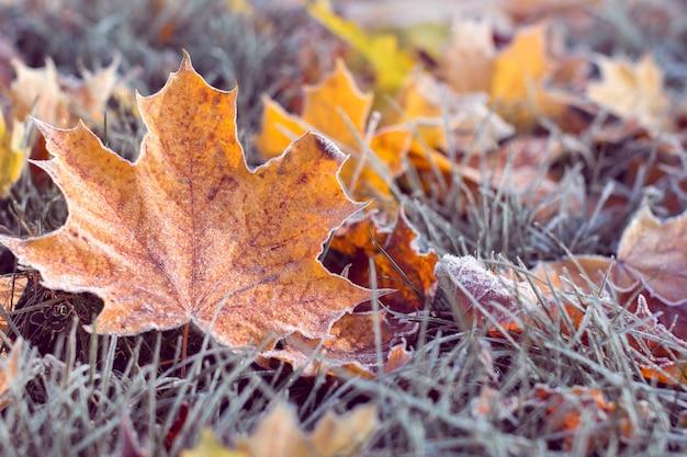 Zima nadchodzi. liść pomarańczowy pokryty jest szronem na trawiastym tle