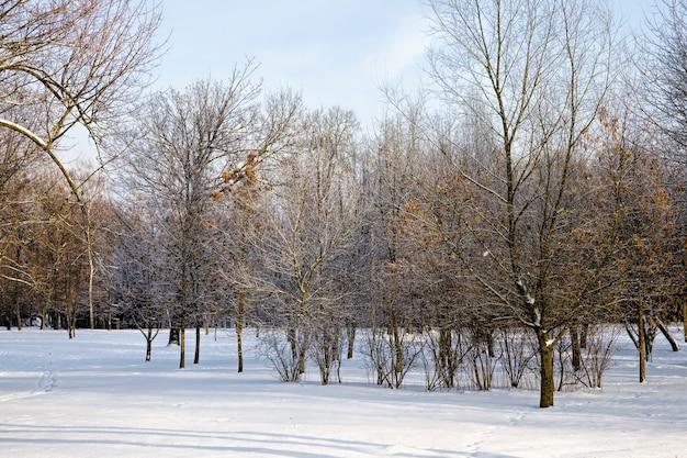 Zimą pokryte śniegiem drzewa liściaste, wszędzie biały śnieg, błękitne niebo i słoneczna pogoda