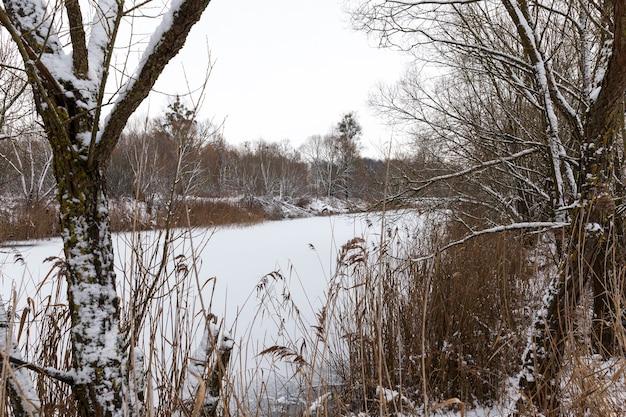 Zimą pokryte śniegiem drzewa