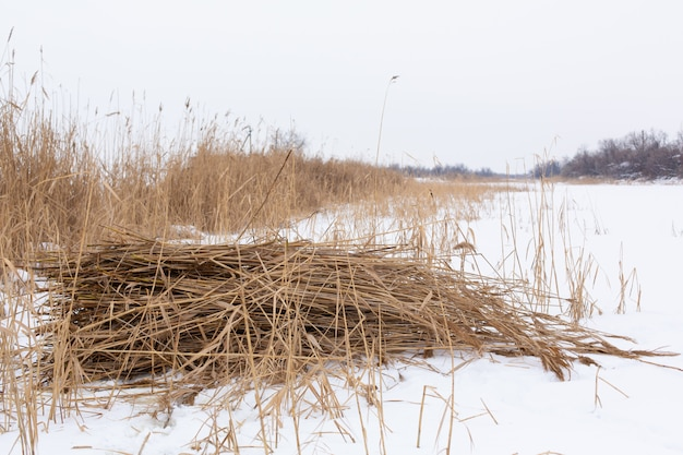 Zima, pole z suchą trawą pokrytą białym śniegiem