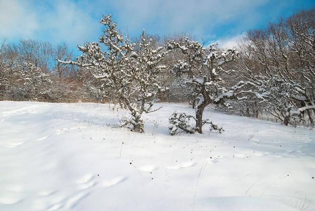 Zima śnieg las z drzewami w śniegu