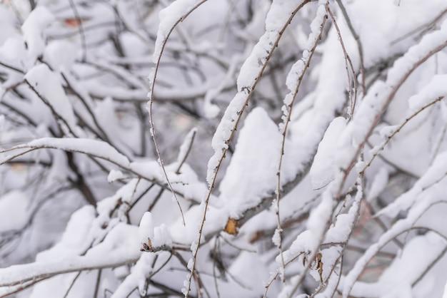 Zima, śnieg na gałęziach drzewa, wzory gałęzie krzaków na śniegu w zimie w pochmurną zaśnieżoną pogodę.