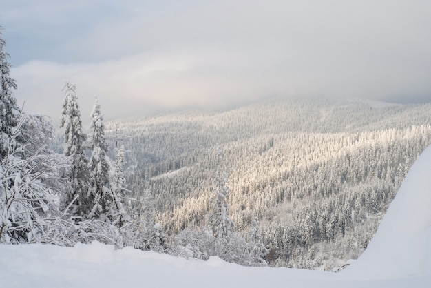 Zima śnieg zakrywał jedlinowych drzewa na górach na niebieskim niebie z słońcem