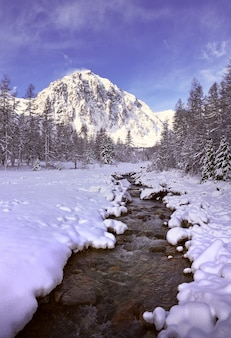 Zima w dolinie aktru górska rzeka z ośnieżonymi brzegami wysokie jodły