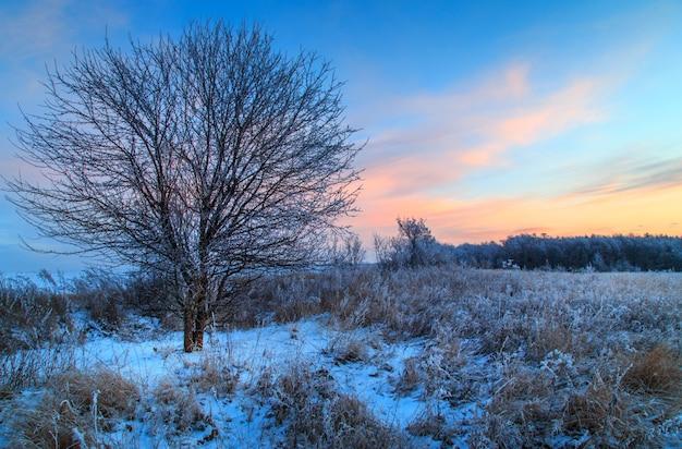 Zima w śniegu w rosji.