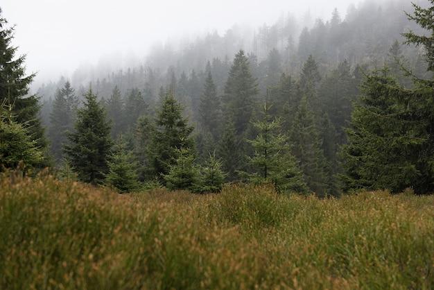 Zimny mglisty las w parku narodowym harz. niemcy.