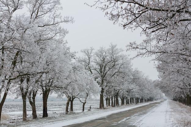 Zimowa aleja