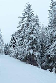 Zimowa droga przełęczy z ośnieżonymi drzewami (austria, tyrol)