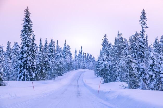 Zimowa droga przez północny las. świerki pokryte śniegiem. czerwone punkty orientacyjne wyznaczające krawędzie jezdni