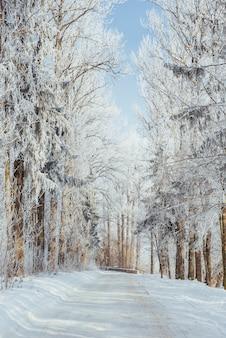 Zimowa droga. scena dramatyczna. karpackie, ukraina, europa.