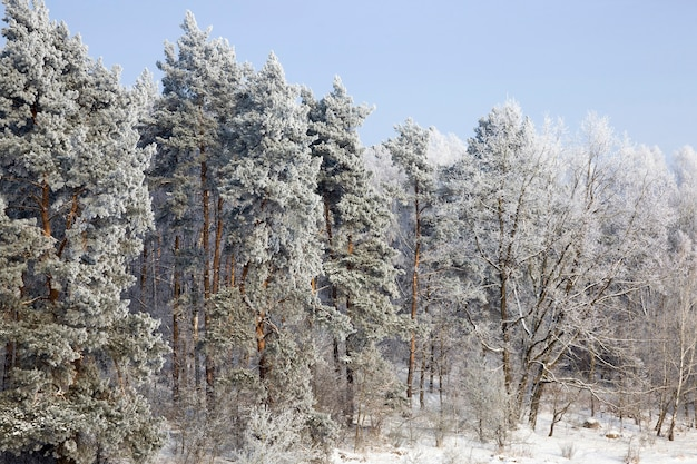 Zimowa pora roku z jasnym, jasnym parkiem, w którym drzewa i ziemia pokryte są głębokim śniegiem