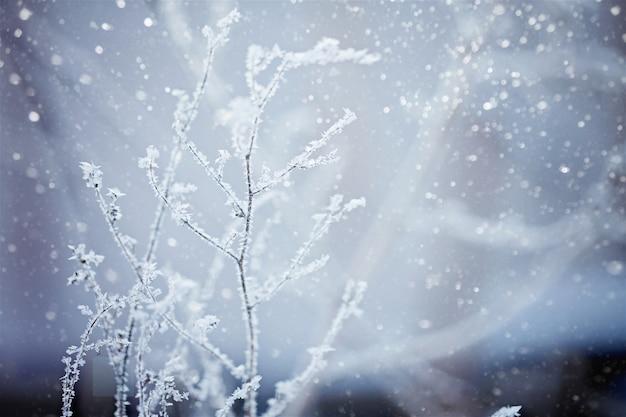 Zimowa przyroda w tle.