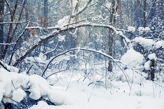 Zimowa scena leśna