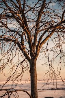 Zimowa sceneria z bezlistnymi drzewami i krzewami rosnącymi na pokrytej śniegiem łące w świetle zachodzącego słońca na wsi