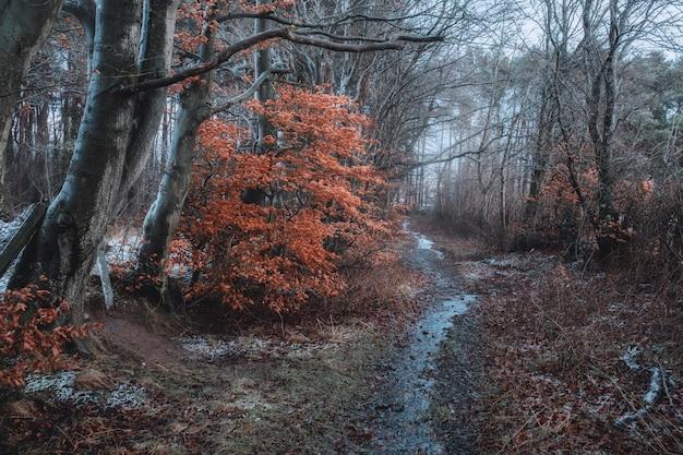 Zimowa ścieżka w lesie, na drzewach wyschnięte jasne liście